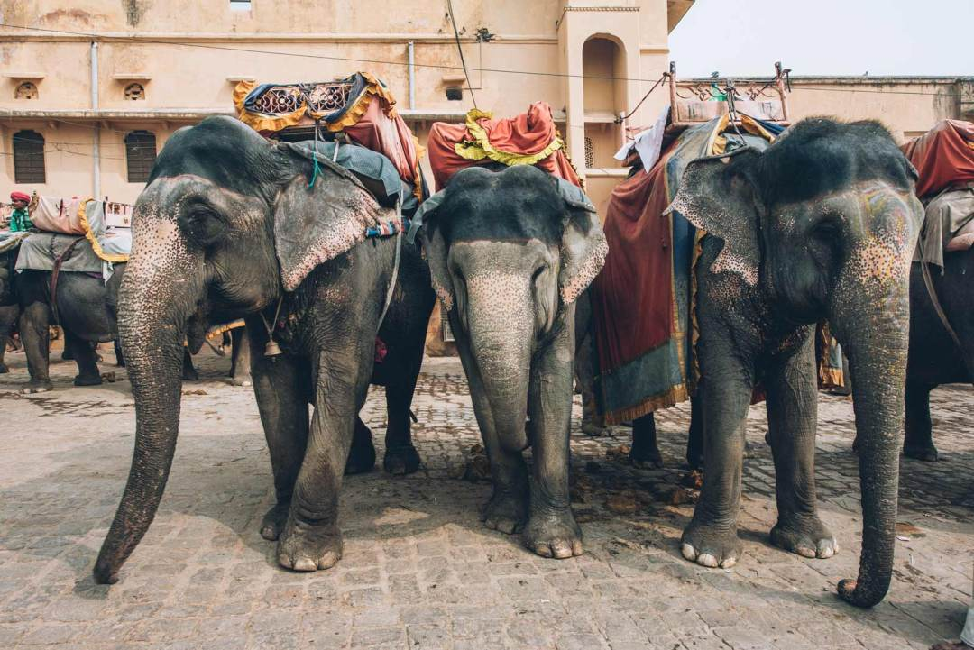 elephant amber fort jaipur