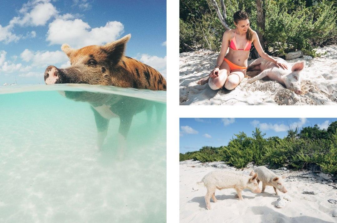 Big Major Cay, Exuma Cay, Bahamas