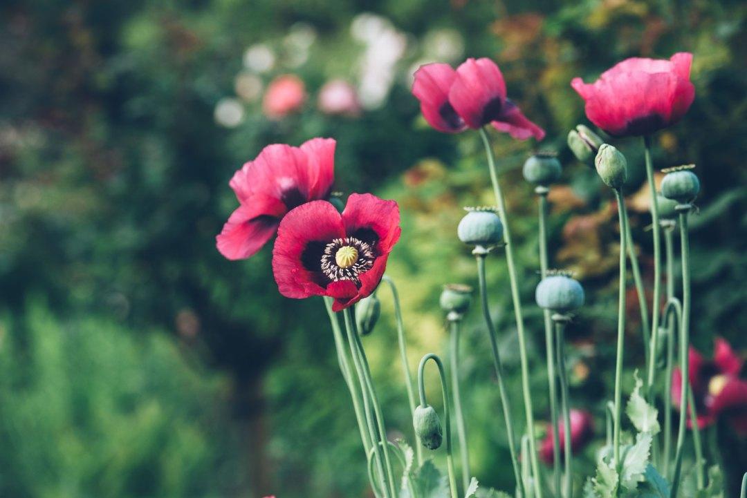 Giverny, Jardins de Monet, Normandie