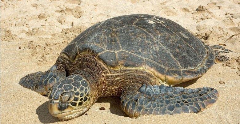 Η Παγκόσμια Ημέρα Χελώνας γιορτάζεται στις 23 Μαΐου