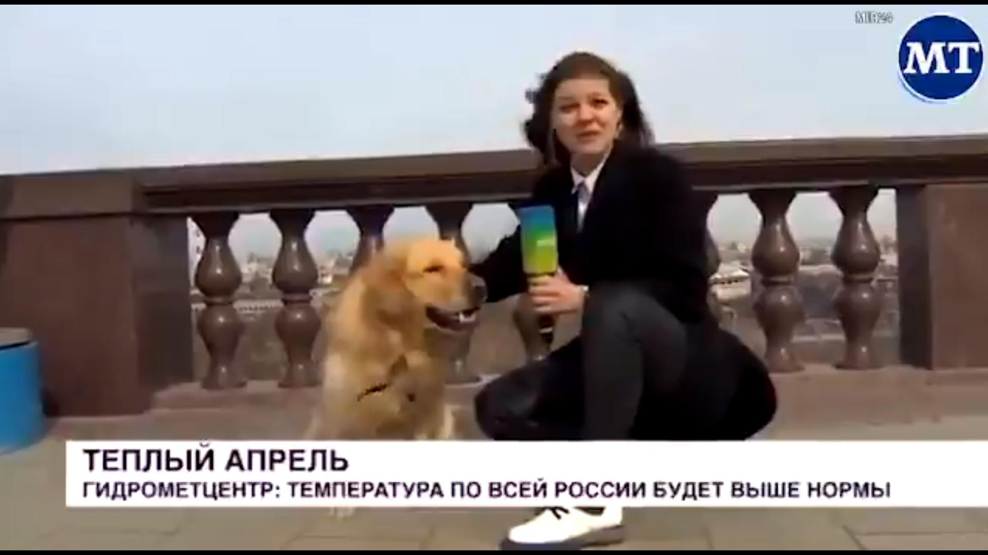 Viral: Γκόλντεν Ριτρίβερ κλέβει το μικρόφωνο δημοσιογράφου στον αέρα