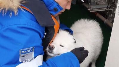 αρκτική σκύλος
