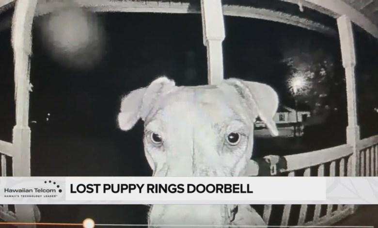 σκύλος εξαφάνιση κουδούνι