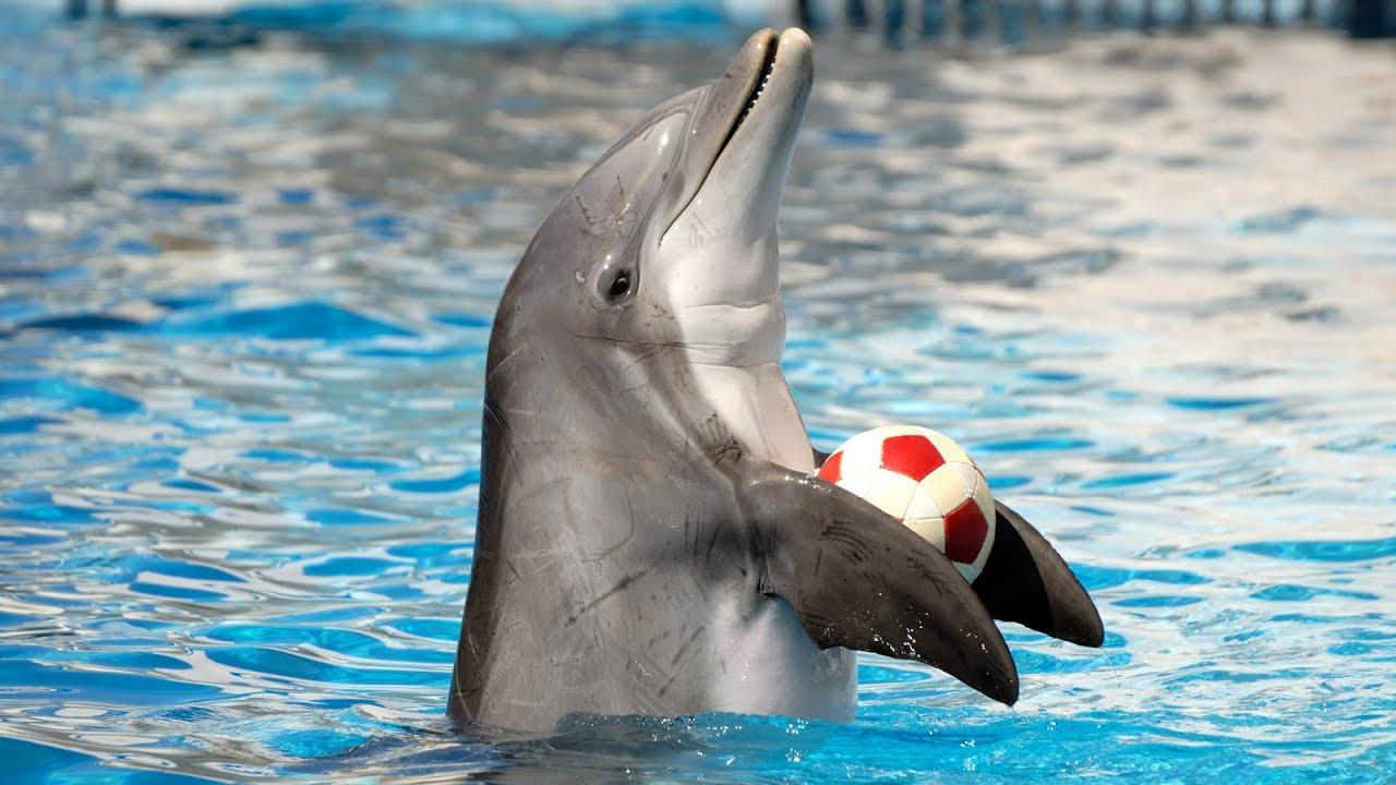 dolphin spirit θαλάσσια πάρκα