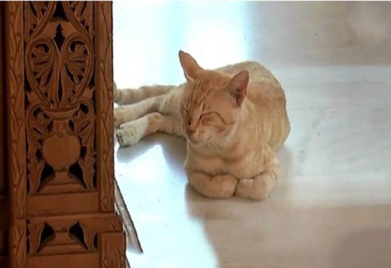 γατάκι Κρήτη κηδείες