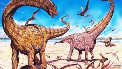 γιγα δεινόσαυροι ανακάλυψη Κίνα