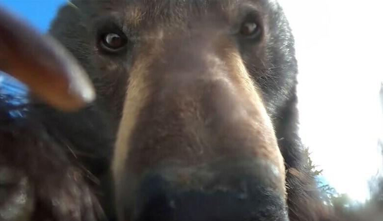 gopro αρκούδα κάμερα βίντεο