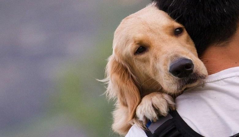 νομοσχέδιο ζώα συντροφιάς