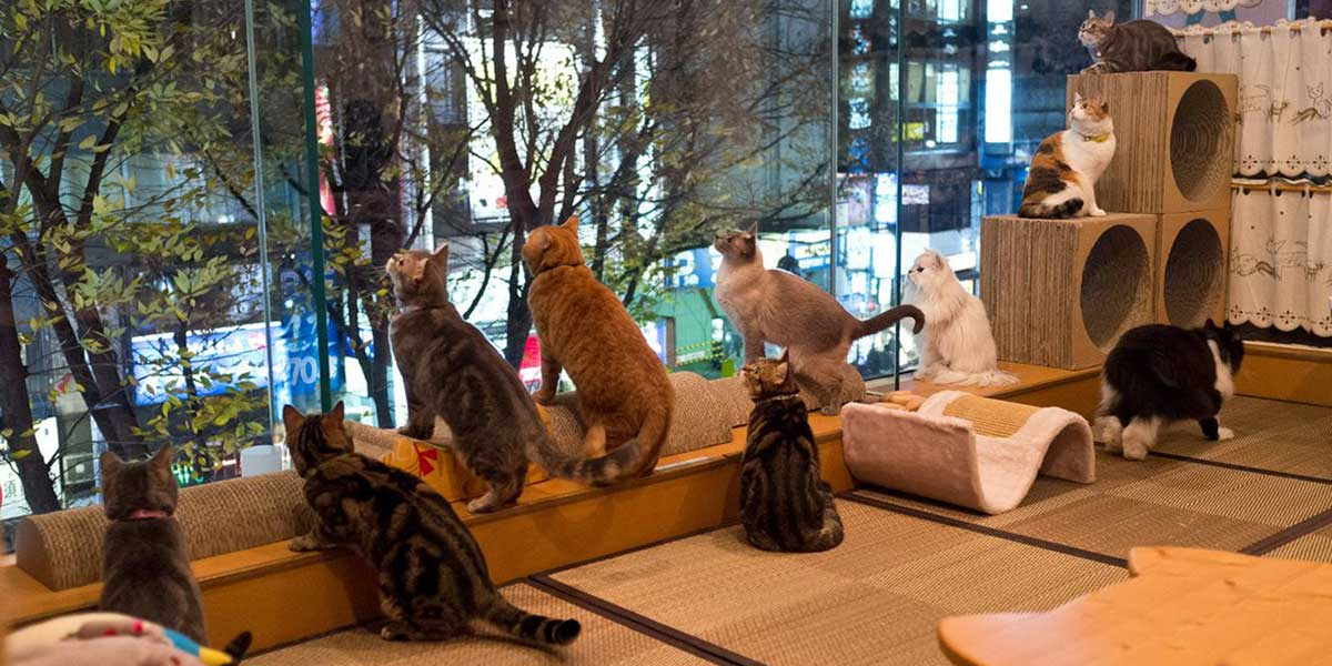 bristol cat cafe