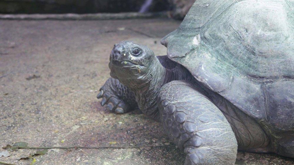 zoo tortoise