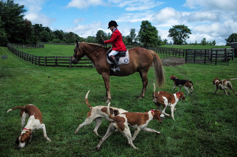 Sally Crane Cox, center, of Gahanna, sits atop her horse as a pack of hounds circle around her after calling them during a fox hound demonstration as part of the Rocky Fork Headley Hunt Benefit Show and Hunt Team Challege on Saturday, June 27, 2015 at Redtail Ridge Farm in Johnstown, Ohio.