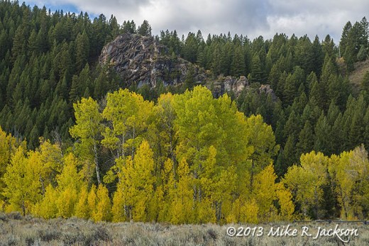 Blacktail Aspens Oct 1