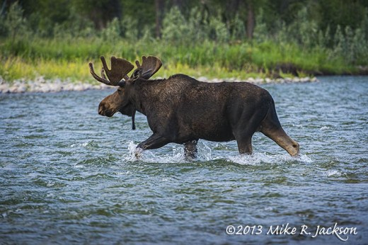 BullMooseCrossingWater2_July5