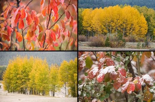 Foliage Sept 26