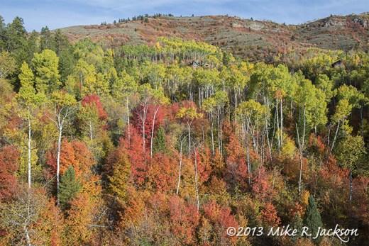 Foliage Wide Shot Oct2