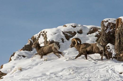 Bighorn Chase Dec27