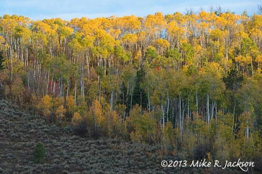 Aspen Hillside October 2