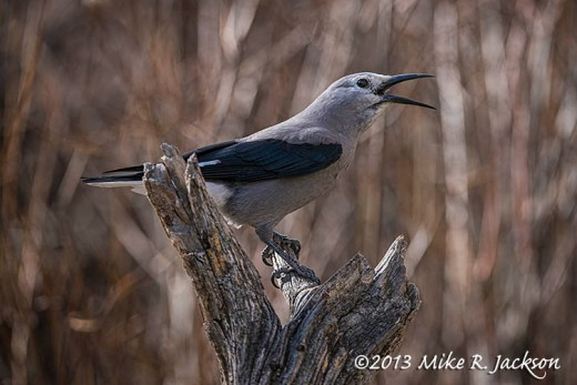 Clarks Nutcracker Nov9