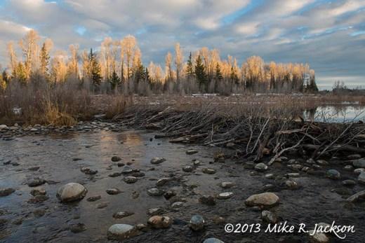 Web Beaver Pond Nov9