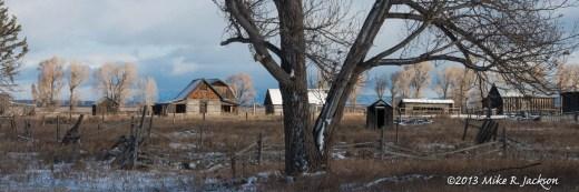 Web East Barn Tree Nov1