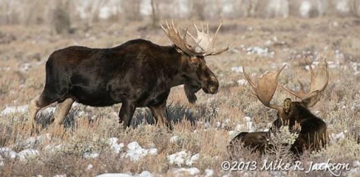 Web Passing Moose Dec18