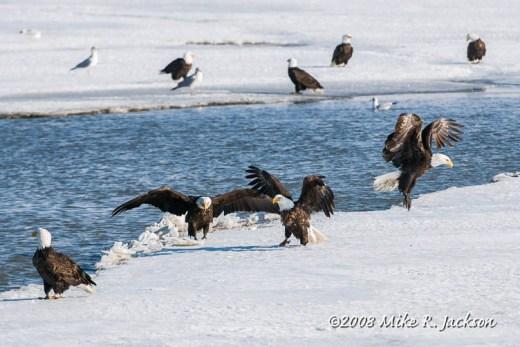 Web Farmington Bay Eagles 2008