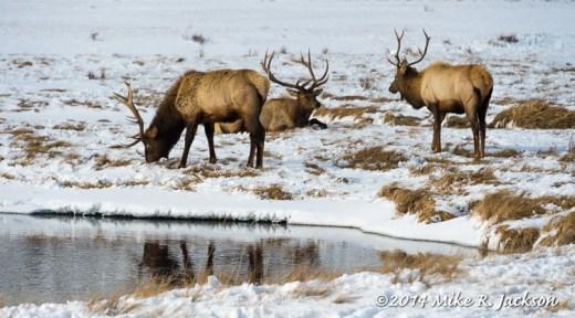Web Bulls Jan31