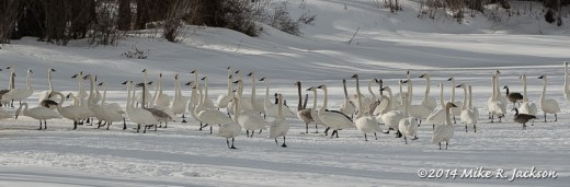 Web Swan Gathering Feb24