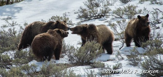 Grizzlies April12
