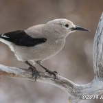 Web Clarks Nutcracker Jan18