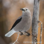 Web Clarks Nutcracker Mar2