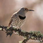 Web Flicker Female Mar15