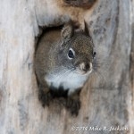 Web Squirrel Face Mar2