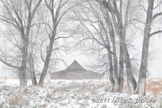 Barn In Trees Nov13