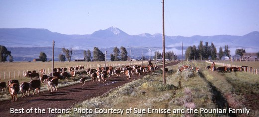 Cattle Drive 1963