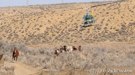 Web Judas Horse 2007