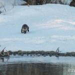 Web_Otter_Apr16