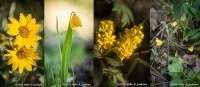 Web_YellowWildflowerSet_May28