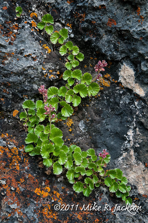 PlantsRocks1_July18