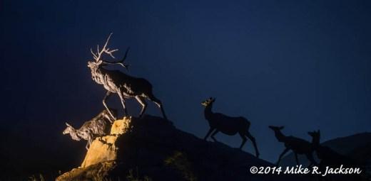 Night Elk