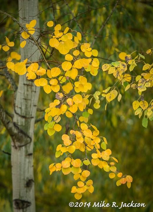 Aspen Branch