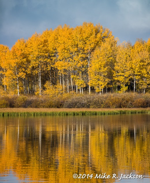 Oxbow Bend Aspen Stand