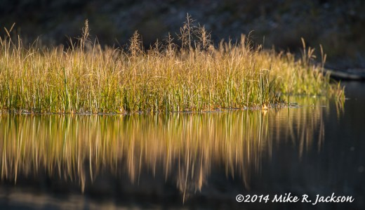 Reflected Grass