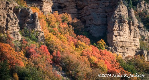 Rocks and Mountain Maple
