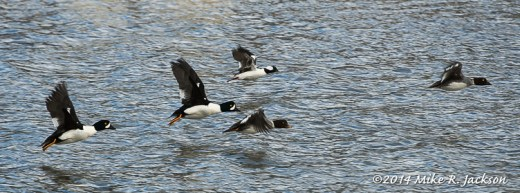 Passing Ducks