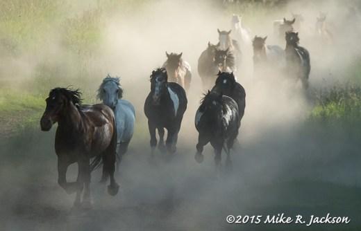 Trail Horses Through Dust