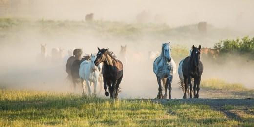 Dusty Trail Horses