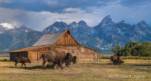 TA Moulton Barn and Bison
