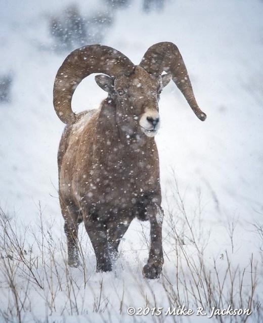 Approaching Ram