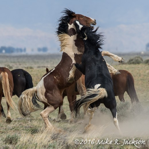 Wild Horse Bite
